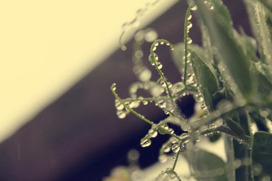 raindrops macro photo