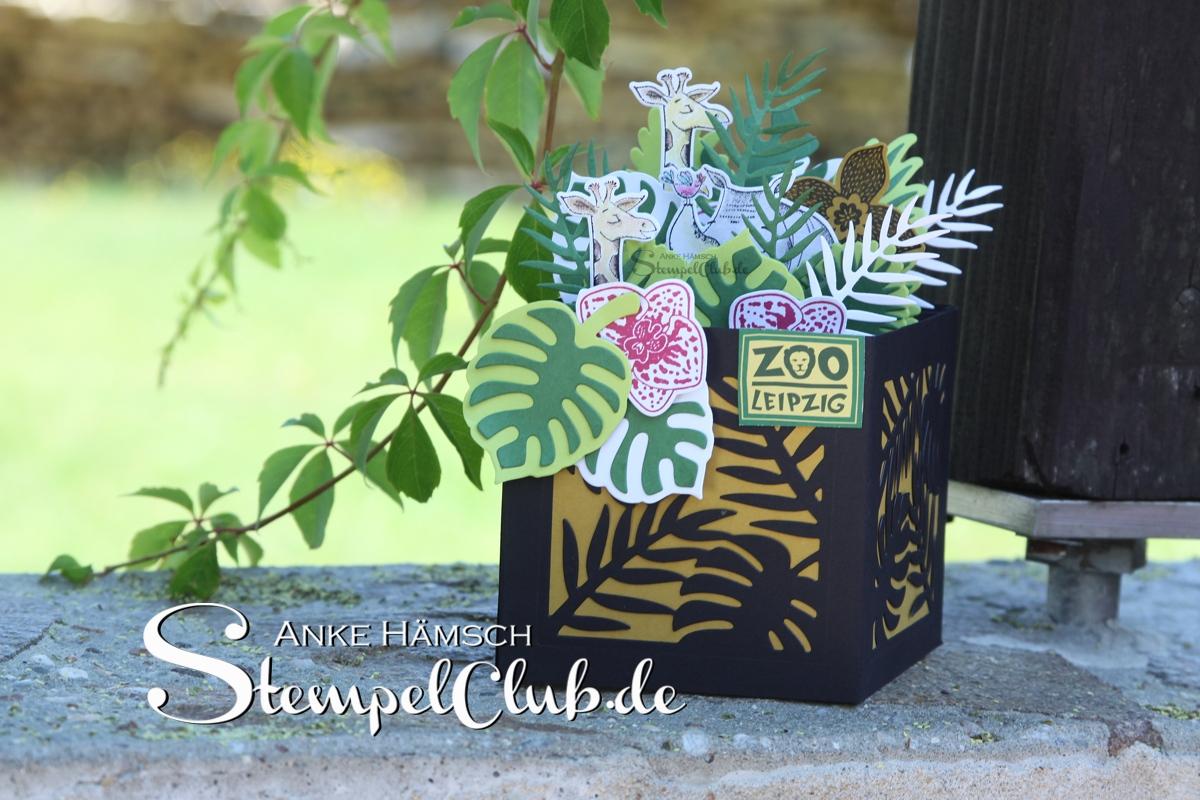 Box Card für einen Zoobesuch, wilde Tiere im Dschungel