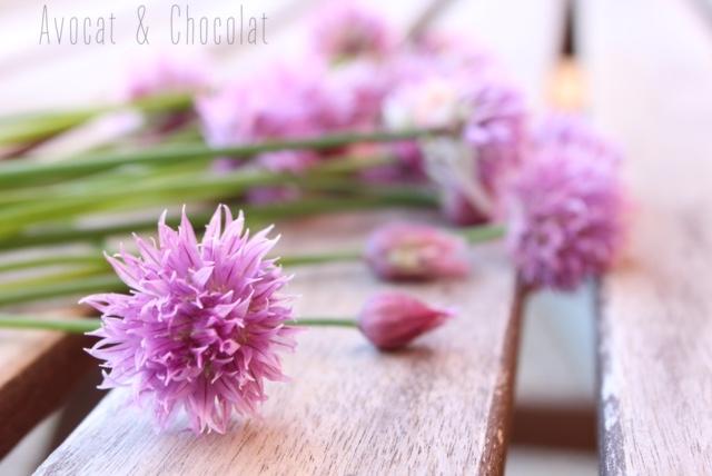 """alt=""""fleurs de ciboulette"""""""