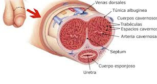 cancer-de-pene-signos-sintomas
