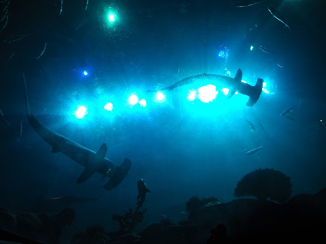 Silhouettes of hammerhead sharks, taken from below the main tank in the Grand Aquarium, Ocean Park, Hong Kong