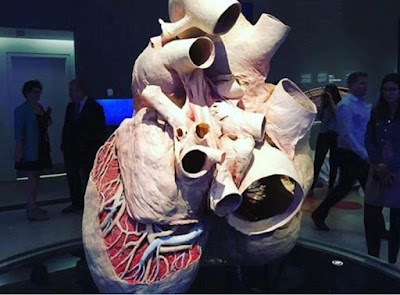 World Biggest Heart, A 220kg Blue Whale Organ, Preserved In Toronto Museum (Photos)