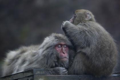 温泉のお猿さん