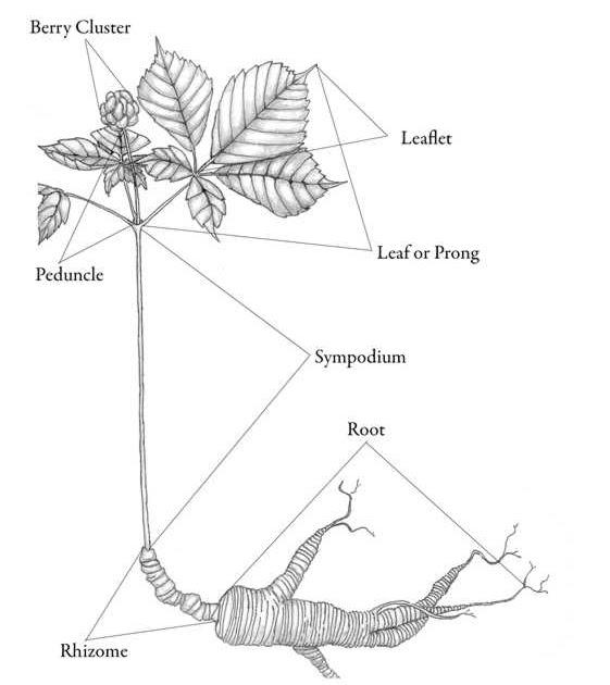 EXAMINATION CENTRE: BIOLOGY PRATICAL