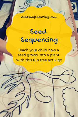 Seed Sequencing: Science Activity for Preschoolers
