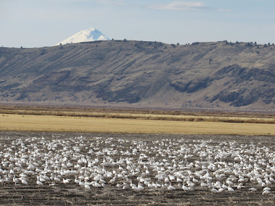 Tule Lake National Wildlife Refuge