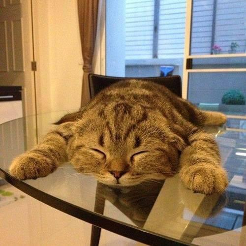 For Cats Lovers Around The World (22 Pics).