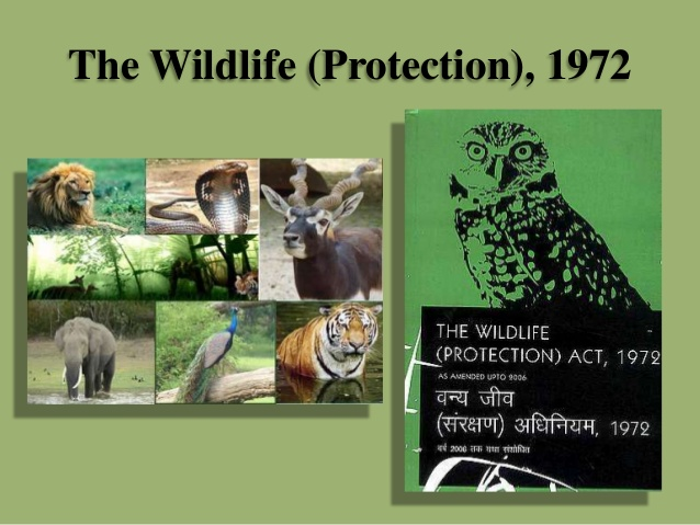 Wildlife (Protection) Act 1972