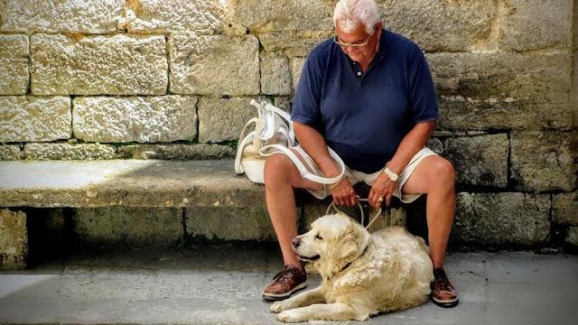 Buongiornolink - Animali domestici consigliati agli anziani: tengono la mente allenata