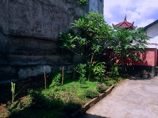 Simple Garden In Front Of My House North Bali Indonesia