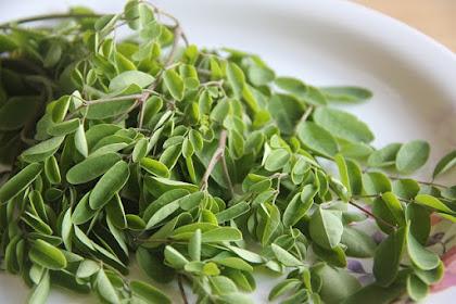 Resep Sayur Bening Daun Kelor  ( Moringa )