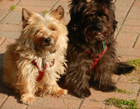 Col  Potter Cairn Rescue Network Post Adoption Blog