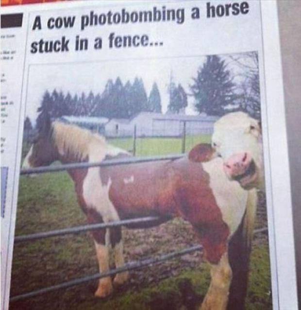 35+ Unseen Funny Photodumps That Will Blow Your Mind