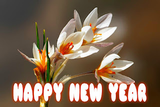 happy new year photos