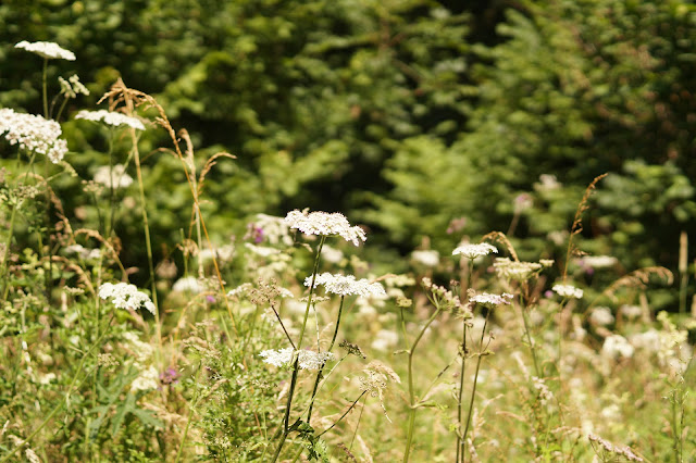 Norfolk countryside in July