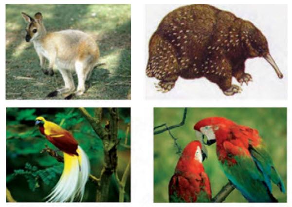 fauna indonesia timur