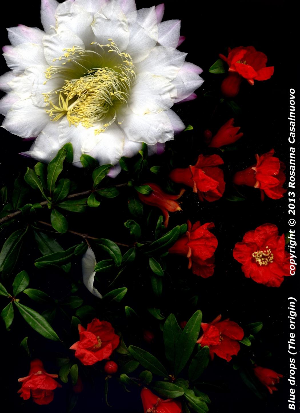 scannografia fiori melograno cactus colori originali