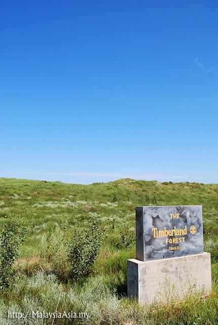 Mongolia Timberland Project