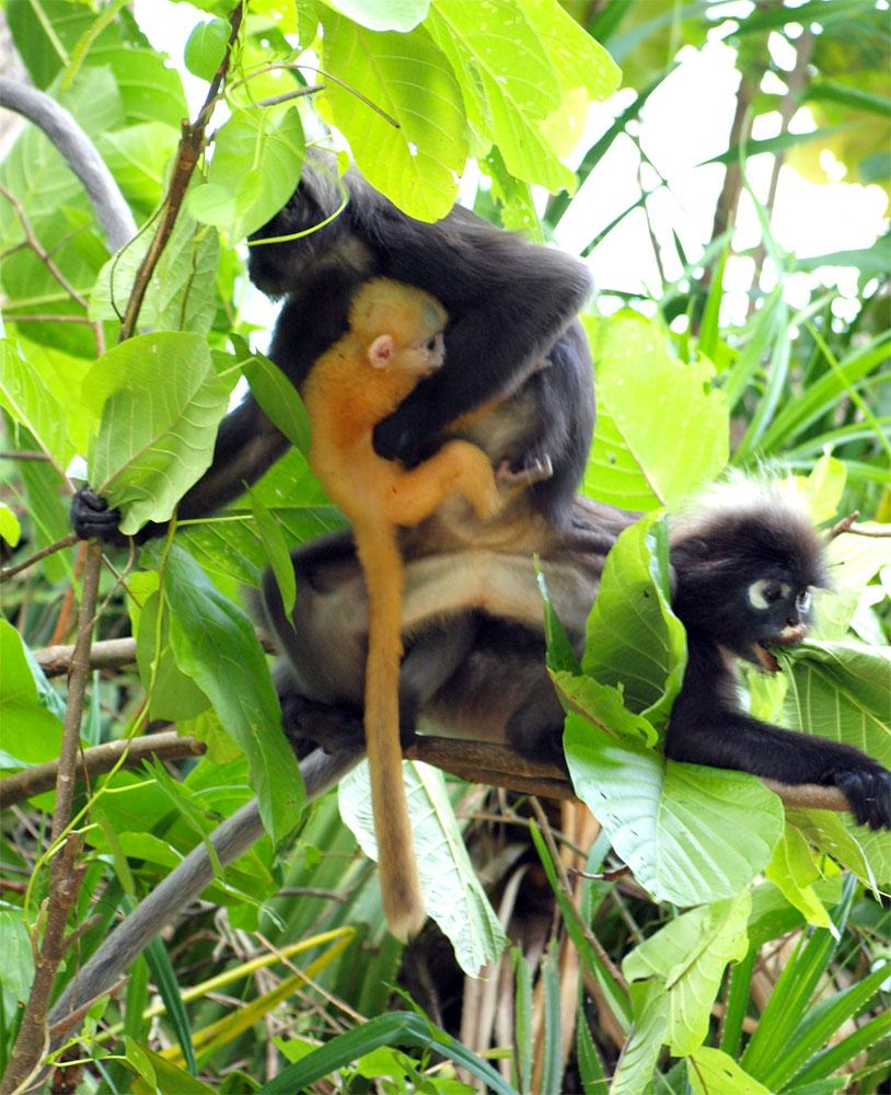 A monkey group with a baby.