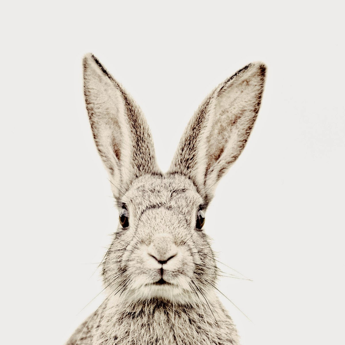 The Big Easter Style Hunt Cracked Mamas V I B