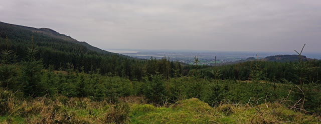 Beautiful views down through Ravensdale forest - C. Gault