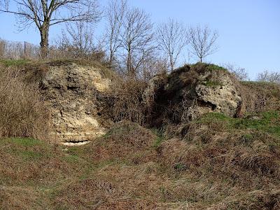 Ponidzie, rezerwat Skorocice, miłek wiosenny Adonis vernalis