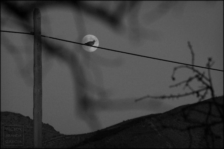fotografia, tortola, luna, fuente_alamo, cable, limites, serie, arte