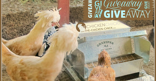 Grandpa's Feeder GIVEAWAY at the Clever Chicks Blog Hop #227!