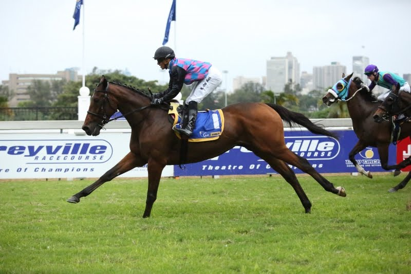 Dark Moon Rising - Vodacom Durban July 2018 contender