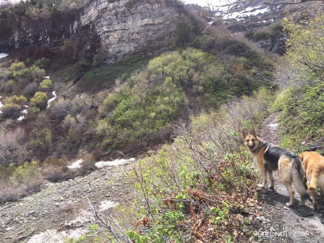 First Falls, Aspen Grove Trail, Hiking in Utah with Dogs