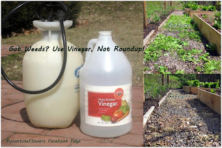 Got Weeds? Use Vinegar, Not Roundup