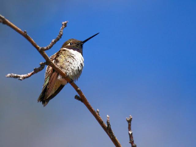 Bird In Everything: Wild Birds Of Southern California