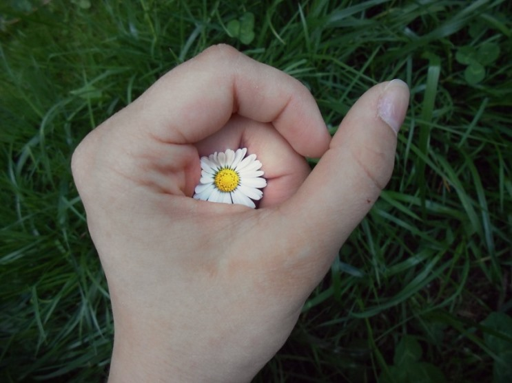 hand with daisy.jpeg