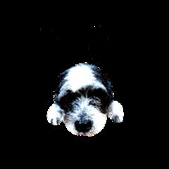 ninja : a  problem puppy