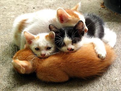 Wallpaper: hermosa imagen de gatitos bebes