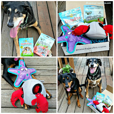 Pooch Perks dog subscription box under the sea