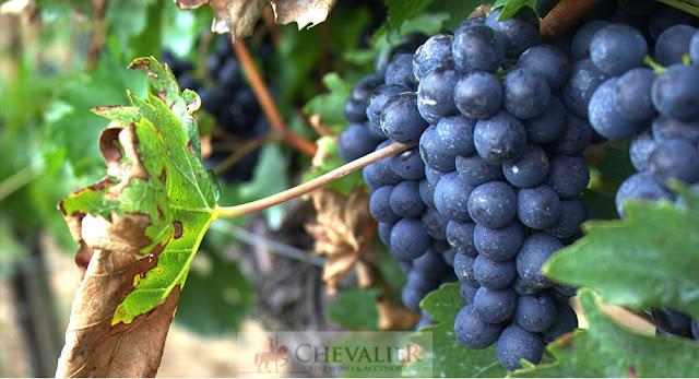 Ở Nga có thể xuất hiện những vùng mới chuyên sản xuất rượu vang