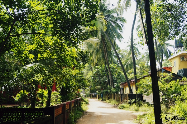 Goa-India-impresii