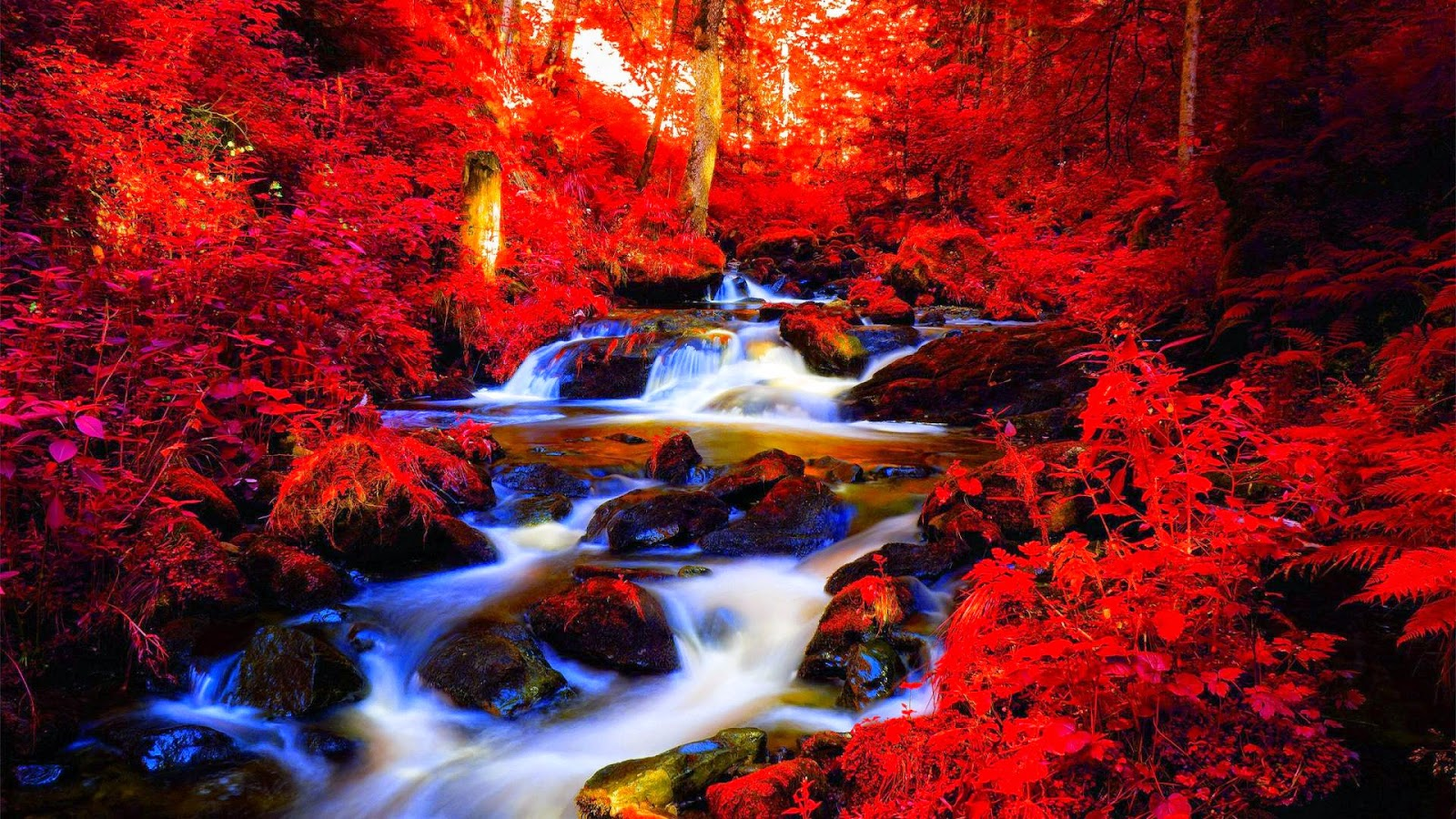 Amazing Red Forest Hd Wallpapers Hyip Bitz Hyip