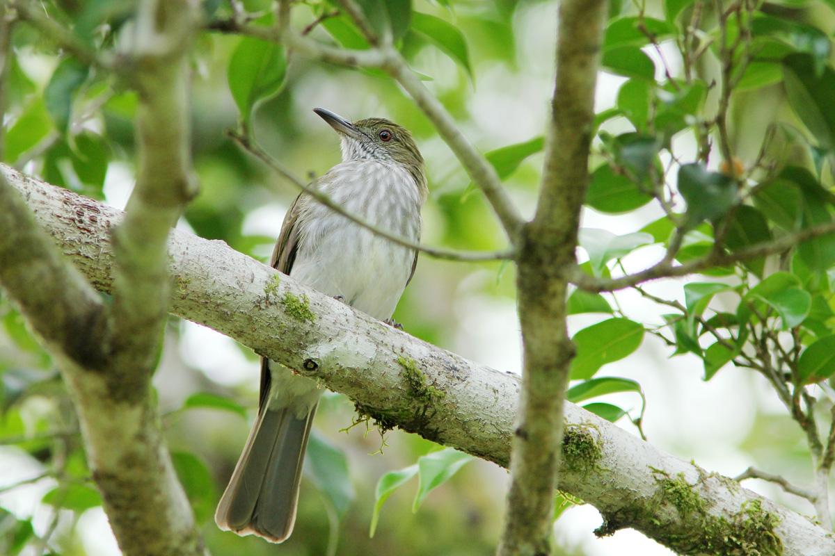 Dunia Burung Perawatan Burung Siri Siri