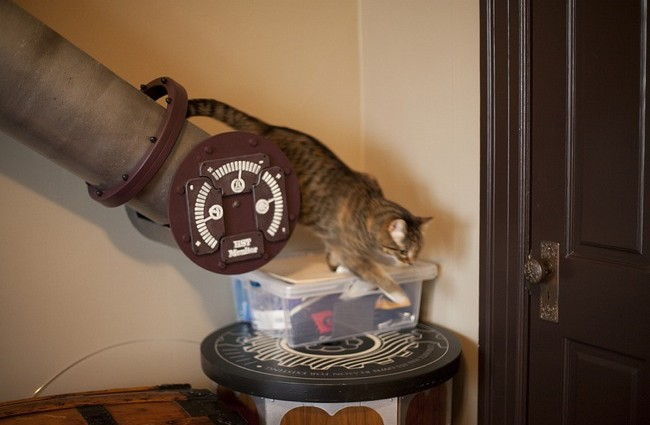 Tubo para el gato instalado en una casa