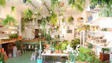 Plantas, café y vida verde con Wildernis en Ámsterdam
