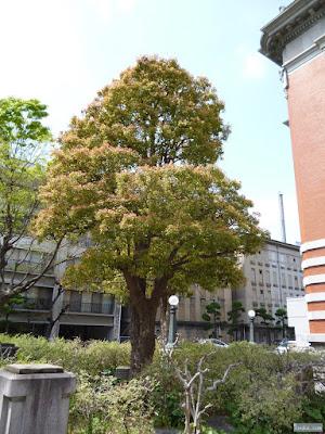 二色の葉の綺麗な木
