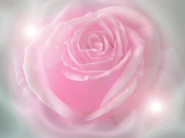 薔薇聖女團