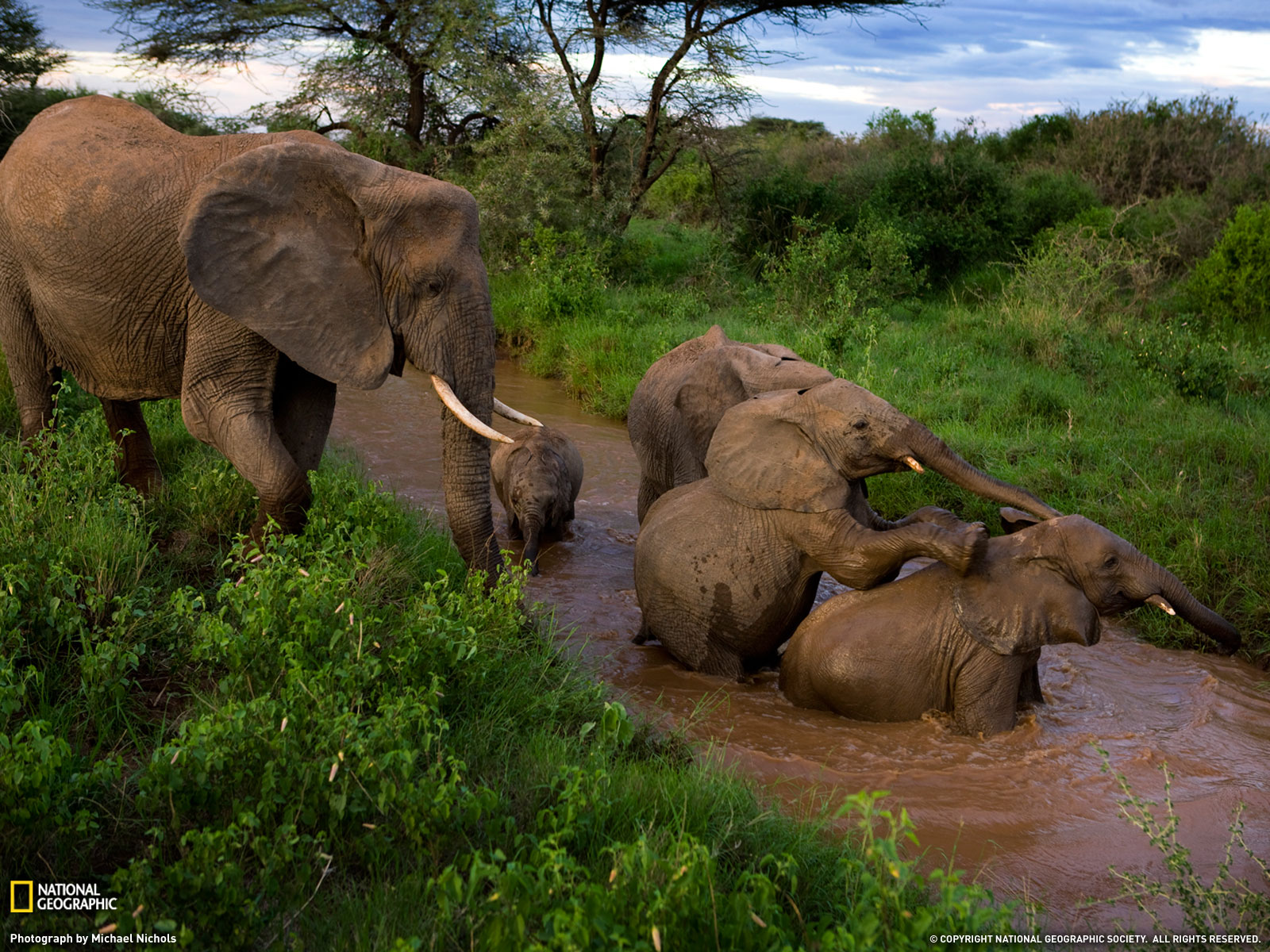 the poaching and eating of animals In a stunning instance of the animal kingdom taking karma into its own hands – or  rather, paws – at least three poachers were mauled to death.