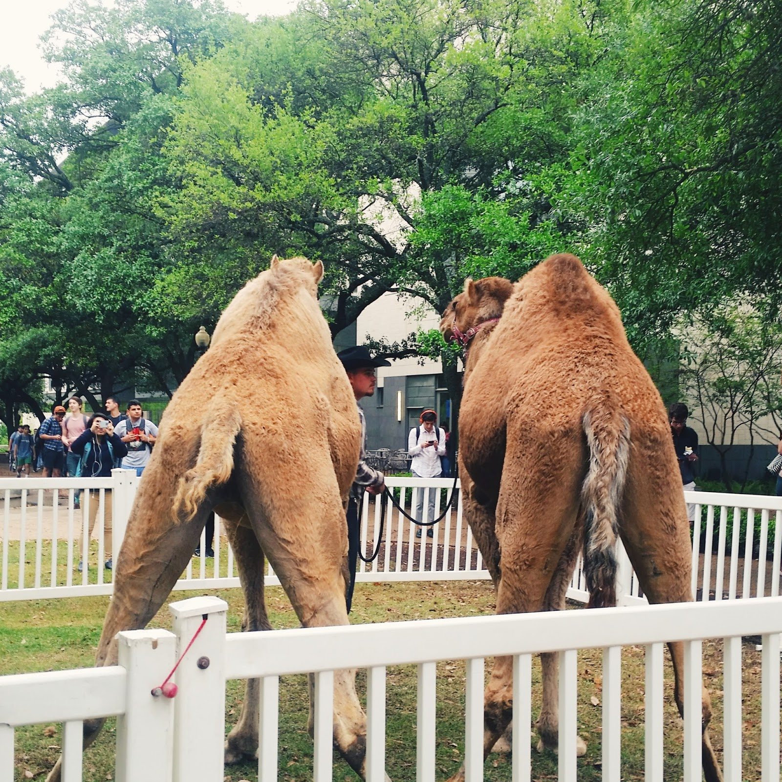 Hump Day at UT
