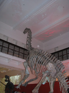 Wedding Reception | 11 November 2011 | Alonya & Richard | Australian Museum, Dinosaur Room, Sydney