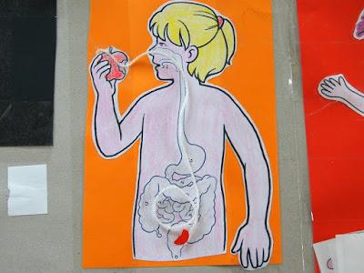 Szablon ciało człowieka