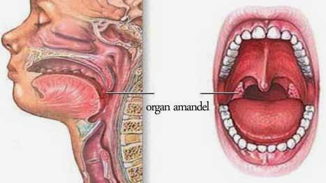 Obat Alami Amandel