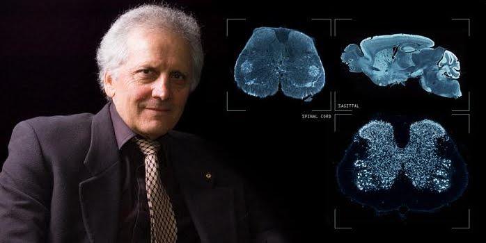 Neuroscienze: Scoperta una regione nascosta del cervello umano.